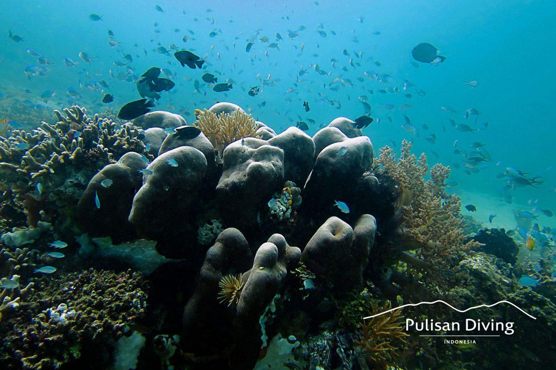 Pulisan Resort - Bangka - Blue Reef