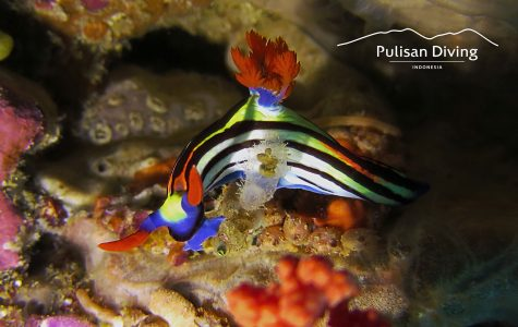 Pulisan Resort - NS cap - Nudi