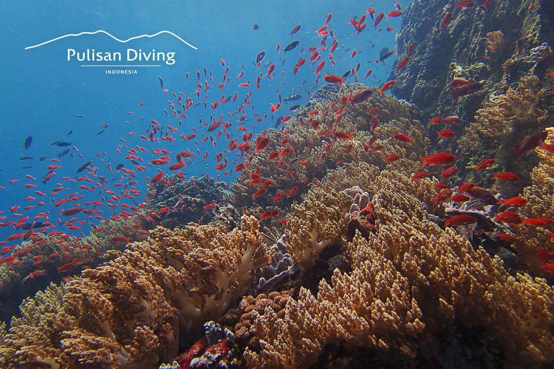 Pulisan Resort - NS Cap - Red Reef